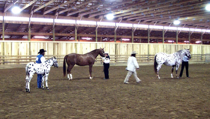 Dream (2 1/2 months old) at his first show with Cedric Greene. Cheyenne, his dam, is the horse in front of him.